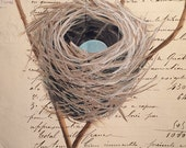 117 Painted Nest French Document greeting card