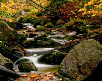 Vermont Stream Fall Autumn Photography Print or Wrapped Canvas New England Stream Leaves Landscape Fine Art Photograph Wall Art Decor