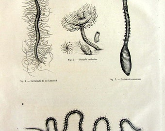 1860 Antique Worms engraving, vintage annelids print, zoology  invertebrates plate, oddity  plume worm Serpula  lugworm  illustration.