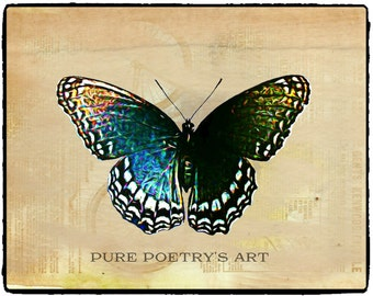 Digital Art Download - Digitally Enhanced Photo of Red Spotted Purple Butterfly -2 Versions