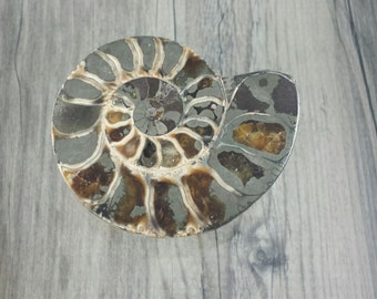 Ammonite Fossils Slice ith Pyrite  3''x 2 1/2''   15mm thick
