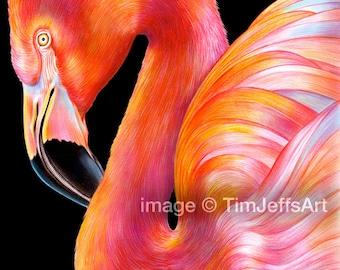 Flamingo Colored Pencil Drawing