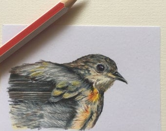 Baby Robin ACEO/ Artists trading card. Coloured pencil. Free UK delivery.
