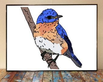 Eastern Bluebird Bird Illustration Poster Print