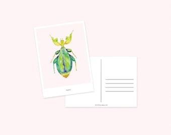 Postcard / Katydid