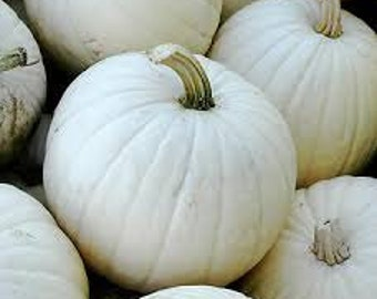 White Pumpkin Seeds, Cucurbita, Lumina, Good for Eating, Large Size, Ghostly White Pumpkins, perfect for painting and carving.