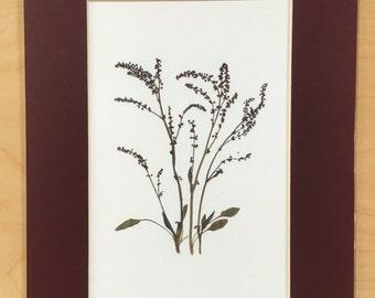 Pressed Flower Art Print - Wild Spring Vine
