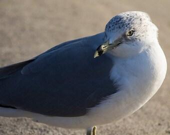 photo of seagull, nature art, bird photograph