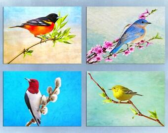 Bird Art Prints, Set of Four 5x7 Prints with Mats, Bird Photography, Baltimore Oriole, Male Bluebird, Red Headed Woodpecker, Pine Warbler