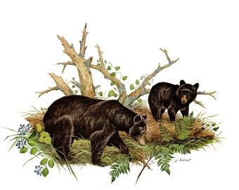 A Large Print of the  American Black Bear painted by James Lockhart for the book Wild America