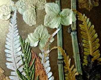 Pressed flowers art, pressed leaves collage, rustic, botanical