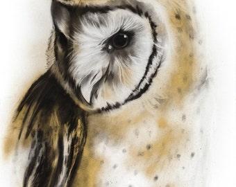 Barn Owl Charcoal Drawing