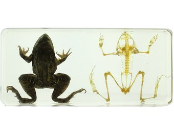 Frog and Skeleton Specimen
