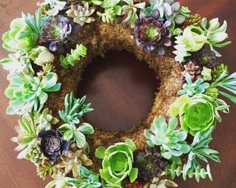12 inch Living Succulent Wreath