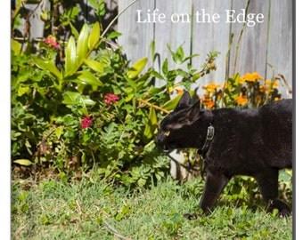Cat Pet Portrait Story Book