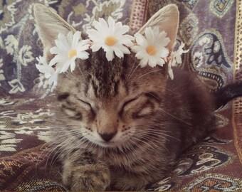 kitten, cat, crown, headband, pet, costume, tiara, wreath, show, photo, prop, puppy, dog, animal, daisy, flower, hippie, boho, accessories