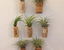 Air Plant Magnets, Tillandsia Magnets, Wine Cork Magnets