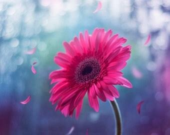 8x8'' Beautiful flower falling petals photography fine art print