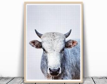 Cow Photography, Print Poster, Large Cow Print, Digital Print, Digital Download, Rustic Print, animal Print Nursery, Cow Art Print, Farm Art