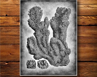 Coral Reef Print, Marine Decor, Nautical Poster Illustration BW307