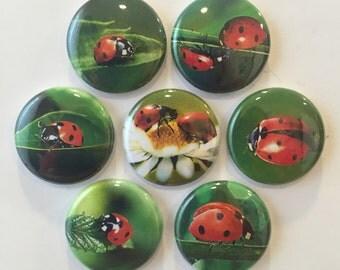 Ladybug Magnets - set of 7
