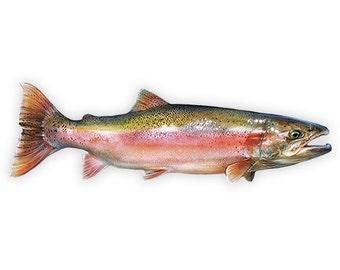 Fishing Decal - Steelhead