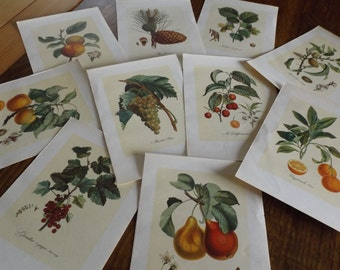 Vintage botanical card / Botanical drawing on vintage paper / vintage garden plants and fruit designs