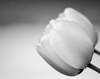 White Tulips, black and white photograph, fine art decorative print