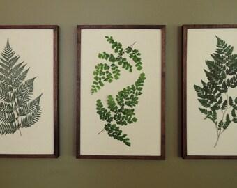 Pressed Botanical Ferns 11x17 in Handmade Walnut Frames