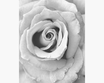 Modern Wall Art of a Black and White Rose, Black and White Photography, Modern Home Decor, Black and White Wall Art, Flower Photograph.
