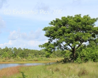 Nature Photography: Summer Solitude- nature photography, trees, lake, water, field