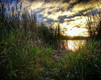 In the Reeds