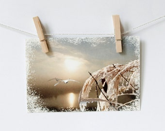 Postcard  swan