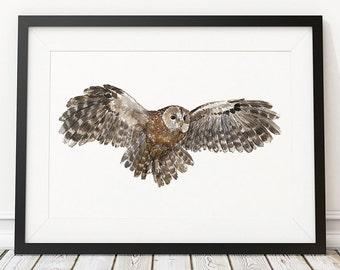 Tawney owl print Owl art Watercolor poster Bird print ACW973
