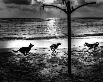 Dogs on the beach, Tel Aviv, Black and White Print, Black and White Photography, Minimalist Wall Art,  Printable Art