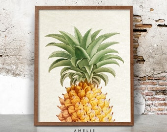 Pineapple Print, Vintage Botanical Wall Art, Printable Digital Download, Home Decor, French Country Style, Shabby Chic, Cottage, Kitchen Art