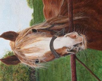 HillArt Jinny Horse Card