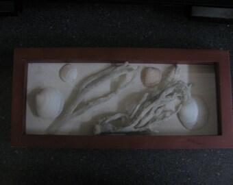 Duck Clam shells in shadow box