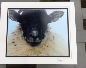 Sheep photo from the Derbyshire dales
