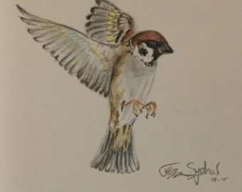 Sparrow,  illustration, Christian theme, colored pencil, bird drawing