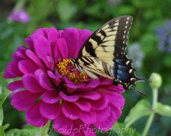 Butterfly, Zinnia, Purple Flower, Flower Photography
