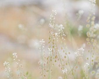 Small White Flower Photograph | Fine Art Photograph | Home Decor