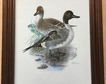 Framed Northern Pintail Duck Pair Art