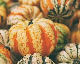 Pumpkin Print - Autumn Digital Photo - Food Market - Food Photo - Pumpkin Photo - Digital Download - Instant Download - Dining Room Decor