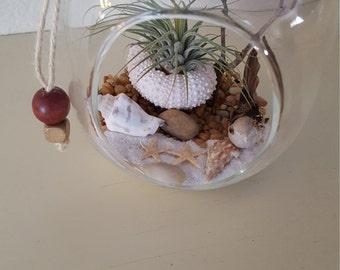 Life's a beach terrarium, Zen Ocean, DIY  Kit