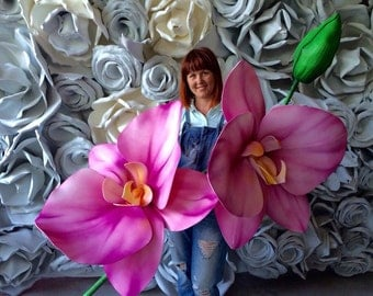 Big flower Orchid - Large Orchid branch - Orchid flower - Giant Orchid