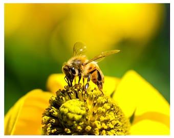 Photo Print of Honey Bee on Yellow Flower from DebSladekPhotography