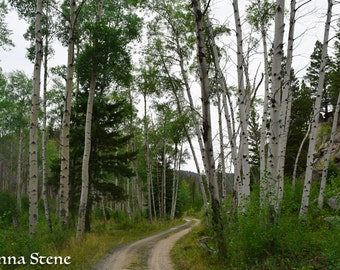 Green Aspens, Montana Photography, nature photography, trees, Western, Mountains