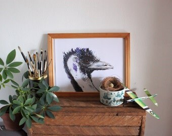 Bird EMU Watercolour illustration