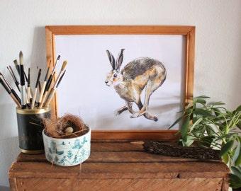 Hare Watercolour illustration